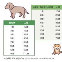 犬の老化サイン
