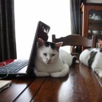 猫の兄弟喧嘩に犬が仲裁?(動画)