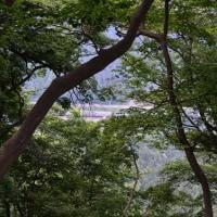 再び八王子市「高尾山~城山~バリルート」へ
