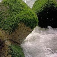 海の岩:26