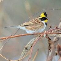 里山の野鳥たち