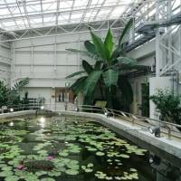 神代植物公園の大温室 その4