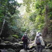 自然観察部~西表島遠征