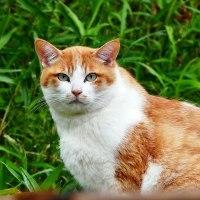 人間よりも人間らしい顔をした猫さん