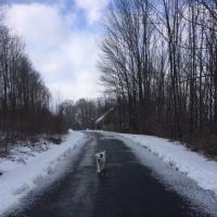 小雪が舞う中を犬猫散歩した木曜日