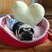愛犬マサル
