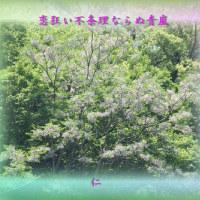 『 恋狂い不条理ならぬ青嵐 』つれづれ575qv2012