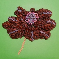 (738) チョコレートコスモス