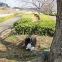 桜はまだだよ~~~