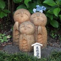 鎌倉 長谷寺 満開の紫陽花