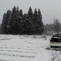 雪の中で最後の収穫(その1)