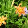 本・コンビニ人間と庭の花