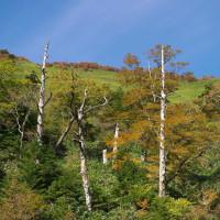 初秋の瓶ケ森林道
