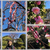 梅の花の見頃