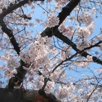 桜の国から戻りました
