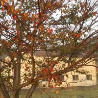 秋と春と…