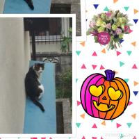 ☆吾輩は猫である!☆