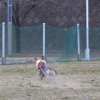 野球少年と ディスク女子コギ♪