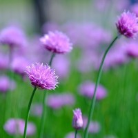 ハッカ記念館のお花