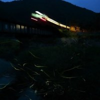 列車と蛍 2