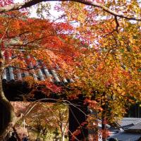 秋月黒門と紅葉(福岡県)