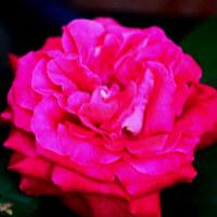 バラ園とお花屋さんにて