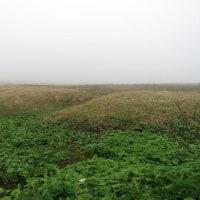 薄く濃く 海霧流るる