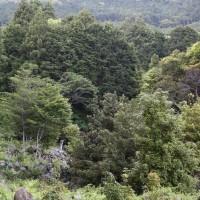 尾鷲の石垣(古江町 NO1)