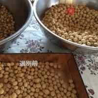 味噌作りに使う大豆選別です! & 甘太は甘太でも・・・・