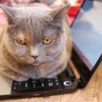 ネームサーバを変更したら2時間くらいはメールが送受信できない