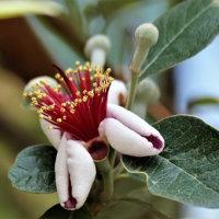 イソギンチャクの様な花