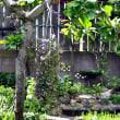 雑草園に咲く花々