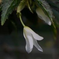 冬の植物園30(ヨシ)