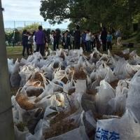 堤防清掃ボランティア
