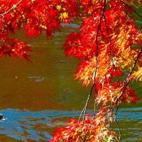 秋の信濃路・・・静かな旧軽井沢別荘街の中の・・・雲場池