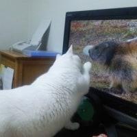 テレビに動物が映ると