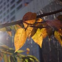 冬の陽を浴びて