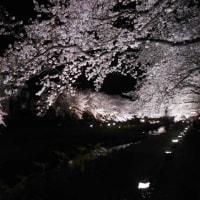野川ライトアップ2017
