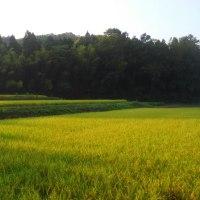 『ピチカート』 田園交響曲のモデルは、日本と日本音楽だった