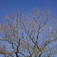 ノラちゃんの厳しい季節。