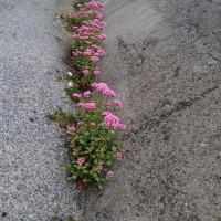 花咲く防波堤