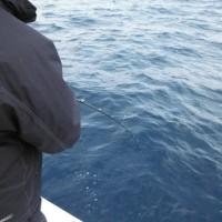 2月24日 珍客来船