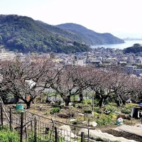 小路・坂道 杏の町