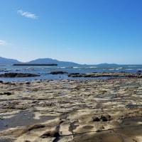 10/27探鳥記録写真(狩尾岬の鳥たち:ダイゼン、クロサギ他)
