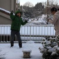 雪や〜こんこん♫