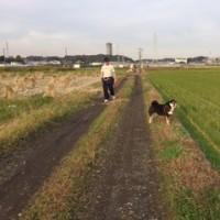 田んぼ散歩