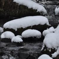冬のくじゅう25(ヨシ)