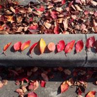 落葉あそび