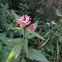 運動会と秋の花