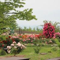 久住高原のお花~(大分県)